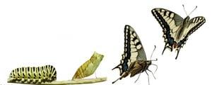 caterpillar-to-butterfly